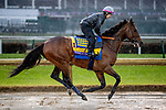 November 1, 2018: West Coast, trained by Bob Baffert, exercises in preparation for the Breeders' Cup Classic at Churchill Downs on November 1, 2018 in Louisville, Kentucky. Carolyn Simancik/Eclipse Sportswire/CSM