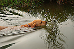 Jeb swimming in pond