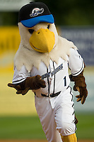 Cutter the Defender Eagle races around the bases at Dodd Stadium in Norwich, CT, Wednesday, August 22, 2007.