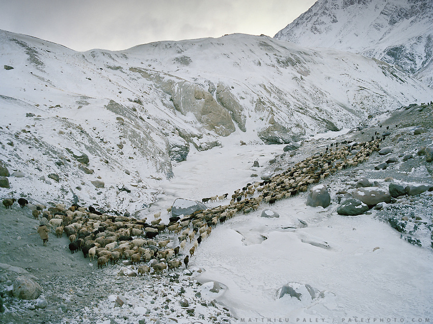 """Wakhi winter shepherds known as """"Shpunds"""" arriving at their settlement of Kher Metek, on the edge of the Little Pamir. They often look over Kyrgyz sheep and yak herds for payment in animals. .Winter expedition through the Wakhan Corridor and into the Afghan Pamir mountains, to document the life of the Afghan Kyrgyz tribe. January/February 2008. Afghanistan"""