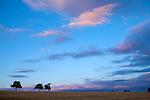 Europa, DEU, Deutschland, Baden-Wuerttemberg, Odenwald, Waldbrunn, Abendstimmung, Daemmerung, Himmel, Wolken, Baeume, Kategorien und Themen, Natur, Umwelt, Landschaft, Jahreszeiten, Stimmungen, Landschaftsfotografie, Landschaften, Landschaftsphoto, Landschaftsphotographie, Wetter, Himmel, Wolken, Wolkenkunde, Wetterbeobachtung, Wetterelemente, Wetterlage, Wetterkunde, Witterung, Witterungsbedingungen, Wettererscheinungen, Meteorologie, Bauernregeln, Wettervorhersage, Wolkenfotografie, Wetterphaenomene, Wolkenklassifikation, Wolkenbilder, Wolkenfoto....[Fuer die Nutzung gelten die jeweils gueltigen Allgemeinen Liefer-und Geschaeftsbedingungen. Nutzung nur gegen Verwendungsmeldung und Nachweis. Download der AGB unter http://www.image-box.com oder werden auf Anfrage zugesendet. Freigabe ist vorher erforderlich. Jede Nutzung des Fotos ist honorarpflichtig gemaess derzeit gueltiger MFM Liste - Kontakt, Uwe Schmid-Fotografie, Duisburg, Tel. (+49).2065.677997, archiv@image-box.com, www.image-box.com]