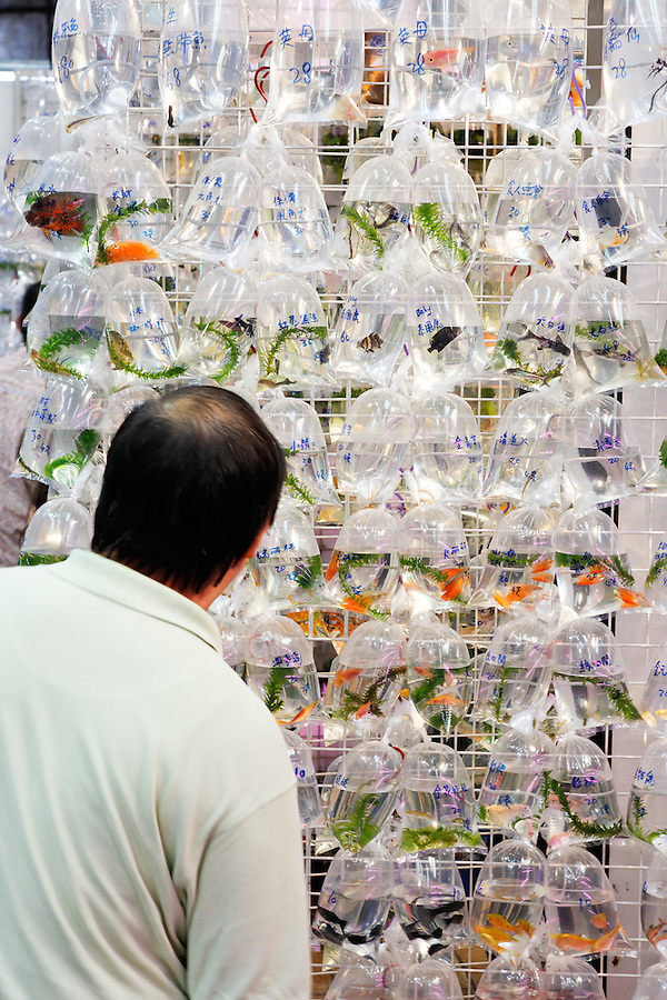 Man looking at bags of goldfish hanging on wall, Goldfish Market, Mong Kok, Kowloon, Hong Kong SAR, People's Republic of China, Asia