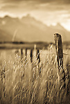 A fenceline stretches into a field of grass at the Walton Ranch in Jackson Hole, Wyoming (selective focus).