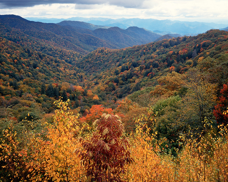 Fall color in Newfound Gap; Great Smoky Mountains National Park, TN