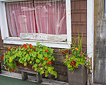 British Columbia, Canada:<br /> Refuge Cove dock house detail of flowers and window