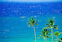 Five stately coconut palms reach upwards against the backdrop of the clear blue ocean off the coast of Maui