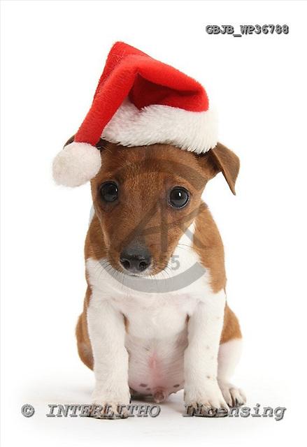 Kim, CHRISTMAS ANIMALS, photos+++++,GBJBWP36788,#xa# stickers