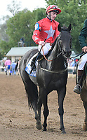 Lexington KY - October 7 Suedois (FR) wins the 32nd running of the Shadwell Turf Mile (Grade 1) for owners George Turner and Clipper Logistics, trainer David O'Meara and jockey Daniel Tudhope.  October 7, 2017