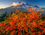 In the early fall and ready for snow, Mount Rainier in Washington is still one of my favorite retreats.  The light just before sunset catches the natural beauty of the Sitka mountain ash which sits in the foreground.