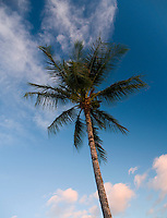 Looking up at a palm tree with clouds decorating the blue sky on the Big Island.