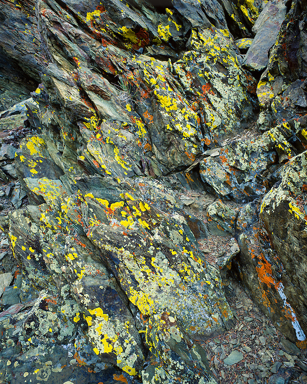 A variety of colorful lichen cover the shady side of a rock outcropping. Photographed in the White Mountain Range, CA.