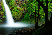 Horsetail Falls, Columbia River Gorge National Scenic Area, Oregon, USA