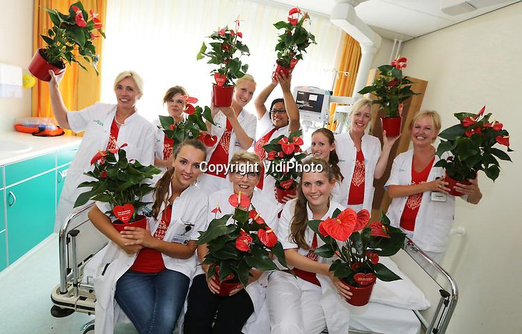 Foto: VidiPhoto<br /> <br /> AMSTERDAM - Verpleegkundigen en artsen van de afdeling Cardiologie van het Sint Lucas Andreas Ziekenhuis worden (woensdag) verrast met Anthuriums met vuurrode hartvormige bloemen. Het Amsterdamse ziekenhuis is &eacute;&eacute;n van de eersten in Nederland met een Hartpoli speciaal voor vrouwen. Hart- en vaatziekten zijn wereldwijd doodsoorzaak nummer &eacute;&eacute;n bij vrouwen. Drijvende kracht achter de nieuwe Hartpoli cardioloog Jutta Schroeder-Tanka: &ldquo;Nu is een extra snelle en doelmatig diagnostiek mogelijk.&rdquo; Nederlandse Anthuriumkwekers hebben een fondsenwerfactie op touw gezet door de verkoop van de &lsquo;plant met een hart&rsquo; ten bate van de Hartstichting. De opbrengsten zijn bestemd voor onderzoek naar hart- en vaatziekten bij vrouwen. Zaterdag is het Dress Red Day. Met het dragen van rode kleding wordt dan stilgestaan bij het werk van de Hartstichting voor vrouwelijke hartpati&euml;nten.