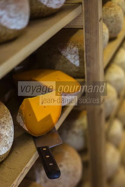 France, Pas-de-Calais (62), Wierre-Effroy :  Fromagerie: La Ferme du Vert  Affinage des mimolettes au lait cru  // France, Pas de Calais,  Wierre Effroy: cheese: La Ferme du Vert,  Refining of raw milk mimolettes