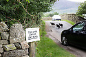 Lake District Cumbria near Buttermere<br /> <br /> Amusing sign writhed in local dialect <br /> &quot;Tek Care, Lambs Ont Road.&quot;<br /> <br /> Lambs stray onto the road near the sign causing two cars to brake to avoid them.<br /> <br /> <br /> <br /> Pic by Gavin Rodgers/Pixel 8000 Ltd