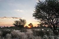 Africa, Botswana, Khwai, The Lodge, Feline Fields, edge of the Kalahari desert. Kalahari bush people, Ju'hoansi tribe. Hunter-gatherer !Kung people, part of San tribe. Sunset.