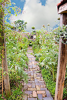 Allee of Artichokes in vegetable garden with brick and tile pathway to chicken coop