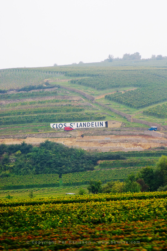 vineyard clos st landelin vorburg grand cru rouffach alsace france
