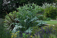 Large architectural plants such as cardoons have been planted to give form, texture and interest