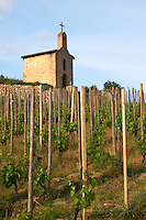 The la chapelle chapel gobelet training vineyard hermitage rhone france