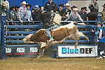 Ryan Miller attempts X27 XD Sports Double Agent of Soggy Hill Cattle Co. during the PBR Blue Def Tour event in Hampton, VA - 3.5.2016. Photo by Christopher Thompson