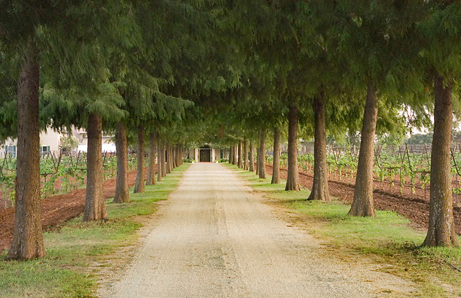 Trees line entrance to Fall Creek Vineyards near Tow, Texas