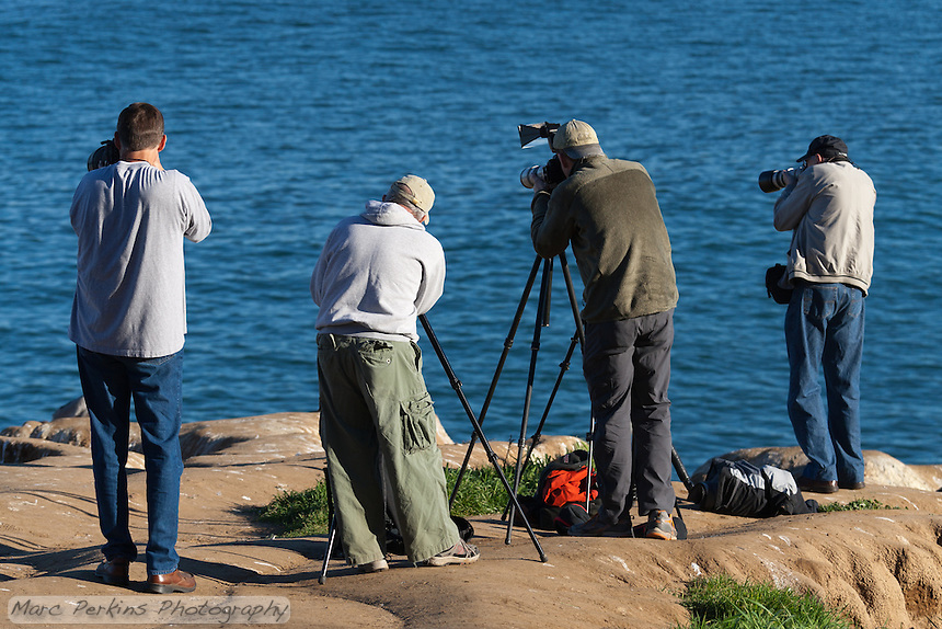 A row of four bird photographers seen on the cliffs at the iconic location overlooking  La Jolla Cove in La Jolla.  The four photographers are focusing on a California brown pelican that's just out of view on the left.  The calm blue of the ocean is behind the photographers; two of them have tripods set up while two are hand-holding their cameras; one has an external flash with a flash extender attached to it.