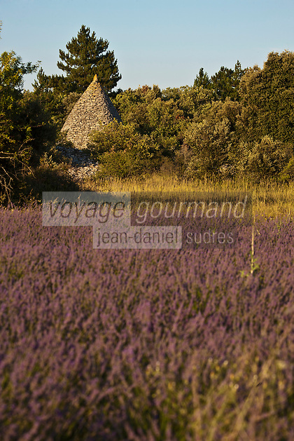 Europe/France/Provence-Alpes-Côte d'Azur/84/Vaucluse/Lubéron/Env de Saignon: Borie et champ de lavande