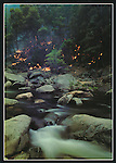 FB 231, American River, wildland fire, 5x7 postcard