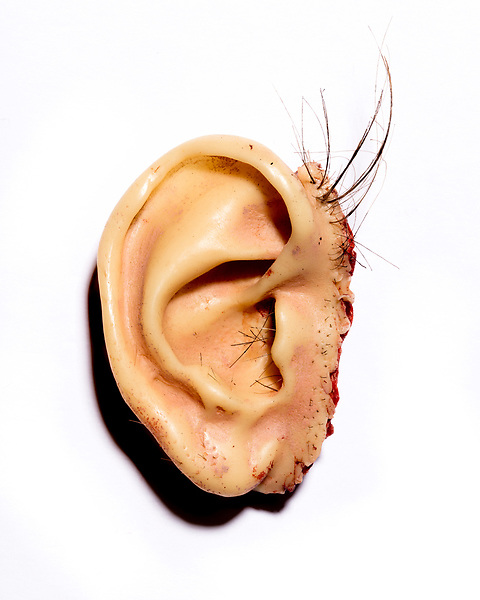 October 2, 2017. Wilmington, North Carolina.<br /> <br /> Second Ear utilizes hair that came from David Lynch's head during a haircut. <br /> <br /> Jeff Goodwin created several sets of prosthetic ears for the 1986 David Lynch film Blue Velvet.
