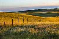 Barbed wire fence separating rangeland in Merz Ranch, Sand Hill Prairie, nebraska