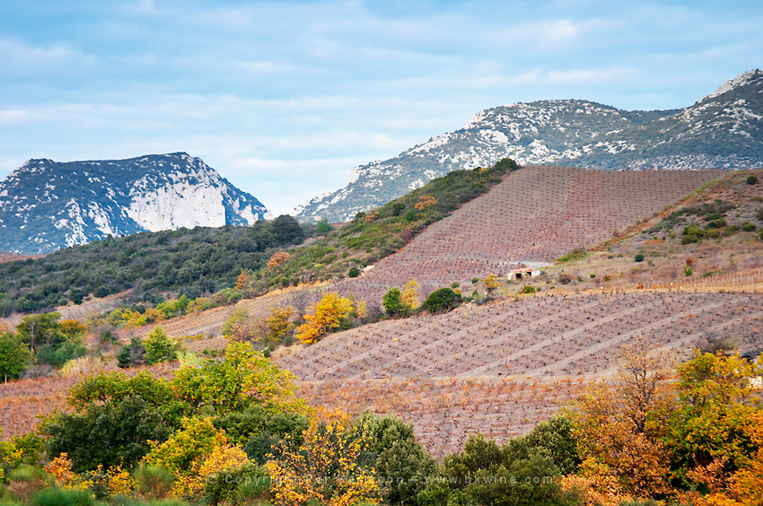 Maury. Roussillon. A tool shed hut in the vineyard. Impressive mountain formations and vineyards in winter. France. Europe. Mountains in the background.