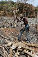 Afrika SIERRA LEONE Western Area Peninsula Forest  , illegale Abholzung von Regenwald fuer Feuerholz Bauholz Plantagen sowie Bauland und Bodenspekulation  | .Africa SIERRA LEONE illegal logging of rainforest at Western Area Peninsula Forest near Freetown , copyright (c) Joerg Boethling