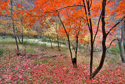 Fall has arrived at Zion National Park