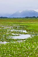 Chugach National Forest, southcentral, Alaska.