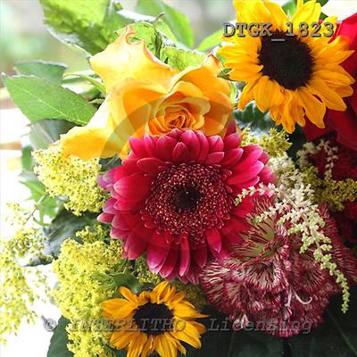 Gisela, FLOWERS, photos+++++,DTGK1823,#f# Blumen, flores, retrato