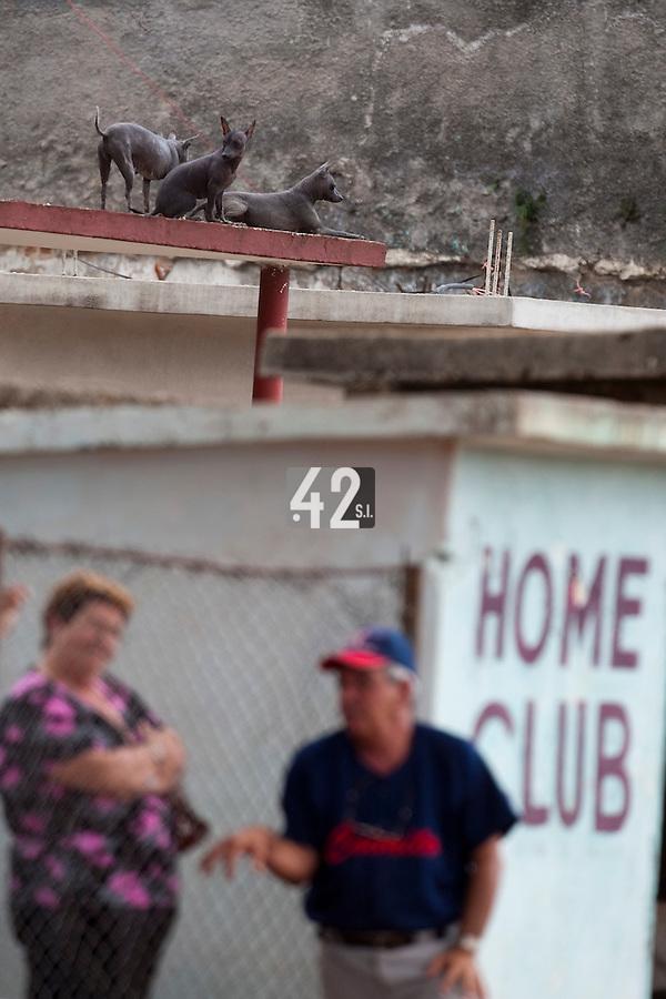 BASEBALL - POLES BASEBALL FRANCE - TRAINING CAMP CUBA - HAVANA (CUBA) - 13 TO 23/02/2009 - DOGS