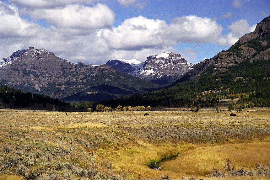 "Soda Butte creek winds through the valley as the ""Thunder"" mountain carries an early dusting of snow. The three bull bison seem to enjoy the warm day in anticipation of the winter to come."