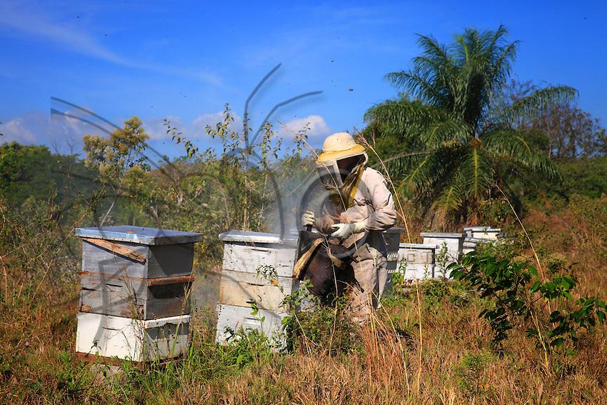 Abundant smoking of the hives is always the beekeeper's first act. Here, it is vital.///L'enfumage généreux est toujours le premier geste d'un apiculteur sur des ruches. Ici, il est vital.