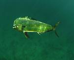 dolphin shallows