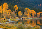 Lake Wenatchee State Park, WA<br /> Fall colors of the tree lined shore reflect in the calm waters of Lake Wenatchee