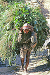 Man Carrying Grasses