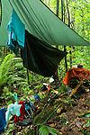 Bornean Clouded Leopard (Neofelis diardi borneensis) researcher's campsite in lowland rainforest, Tawau Hills Park, Sabah, Borneo, Malaysia