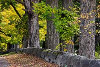 Rural tree lined road, Bennington, Vermont, USA.