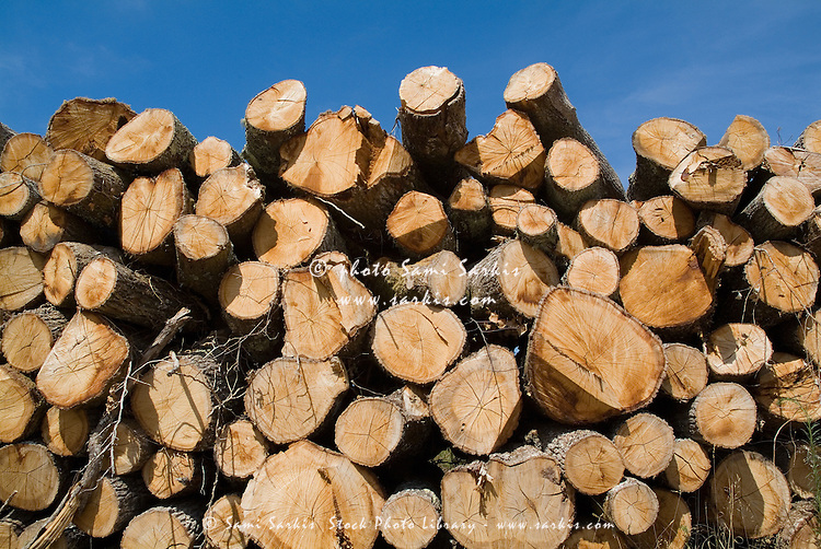Stack of wooden logs in the Landes forest, Aquitaine, France.