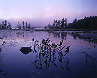A foggy morning near Wintergreen Point on Pharoah Lake in the Adirondack Mountains of New York state