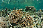 Coral reefs of Bunaken National Park