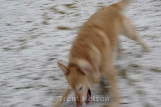 Sophe in the snow. dog<br />