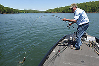 NWA Democrat-Gazette/FLIP PUTTHOFF <br /> Mitch Glenn swings a spotted bass into his boat on May 15 2019 while fishing the high water at Beaver Lake. Bass, crappie and bluegill can be caught from flooded bushes at the lake now and until the water warms this summer, Glenn said.