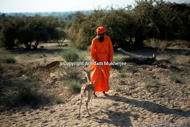 Shri visudhanand Bishnoi feeding wild black buck and chinkaras in the forest area near jambeswar temple at jajwal near Jodhpur in Rajasthan, India. Arindam Mukherjee
